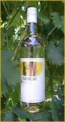 Muscat AOC
